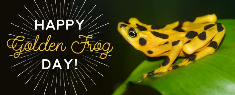 Panamanian Golden Frog Day