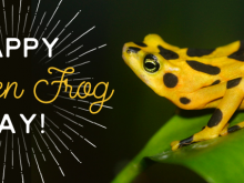 Golden Frog day is used to bring awareness to the endangered Panamanian golden frog.